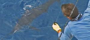 Sportfishing in the Sweet Gulf of Costa Rica