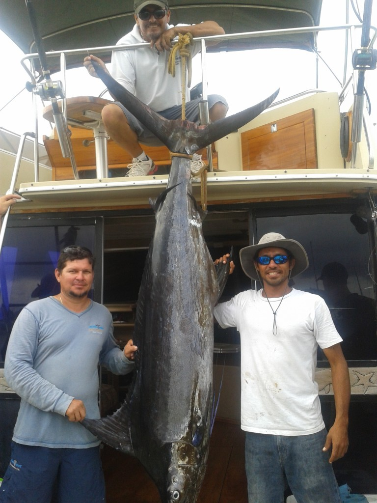 Luis (Captain), Nelson (Crew) and Johnathan (Crew) with a big Marlin