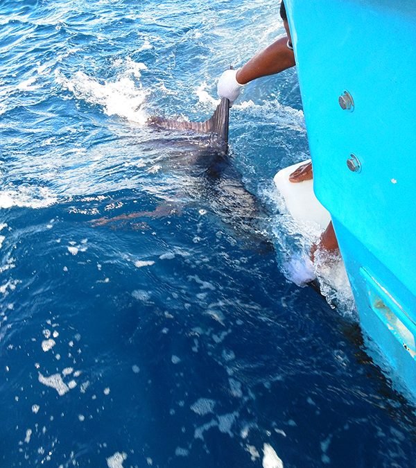 500 pounds Marlin